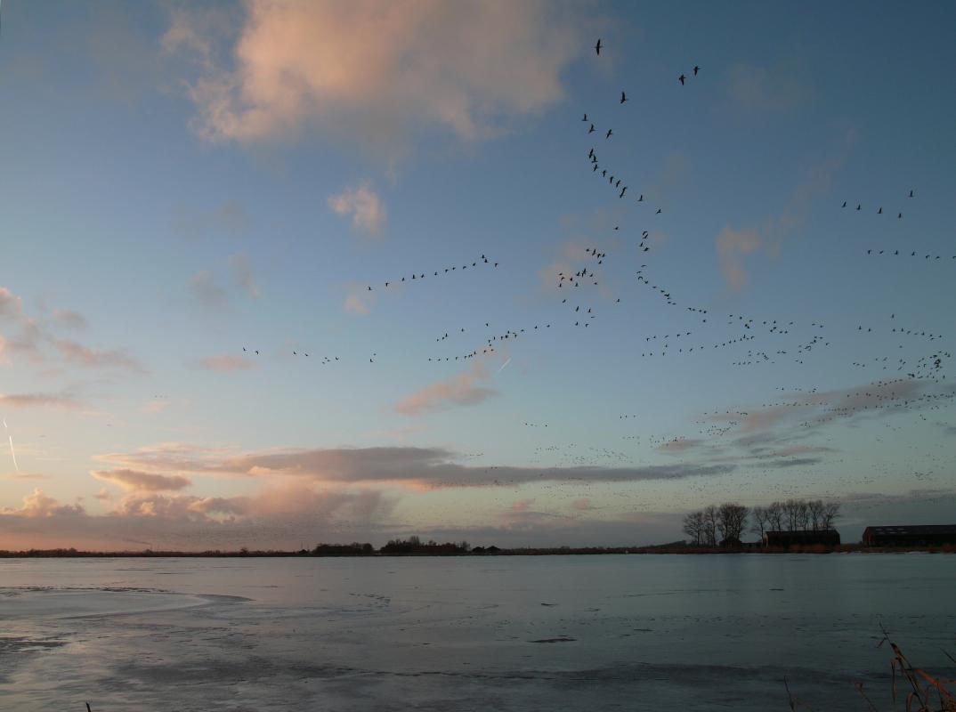 Nederland,  Waterland Uitdam 1 december 2010Winter in en om de IJsselmeerdijk  en het IJsselmeerFoto: Marijke Bresser/ Hollandse Hoogte